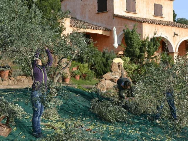 agriturismo nurazzolas - sardinie (1).png