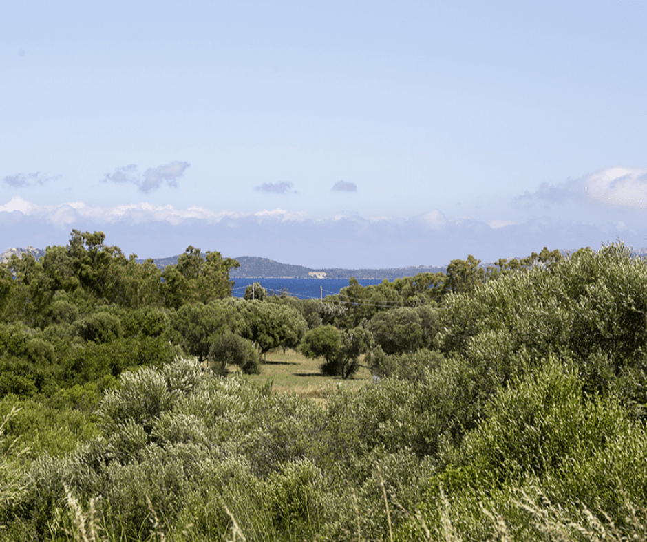 residence capraggia - sardinia4all (10).png