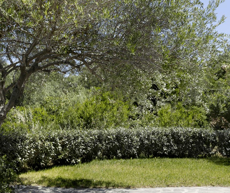 residence capraggia - sardinia4all (8).png