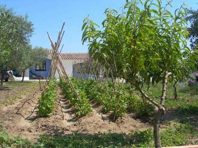 agriturismo in sardinie - Guthiddai in Oliena (10)